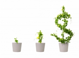 green plants growing shaped like the American currency symbol